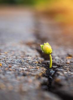 아스팔트 도로의 균열에서 성장하는 나무의 한 녹색 젊은 씨앗. 환경 개념