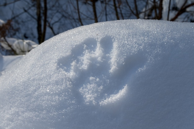One hand print in snow in forest