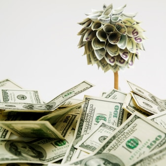 One hundred dollars banknotes fell from a money tree
