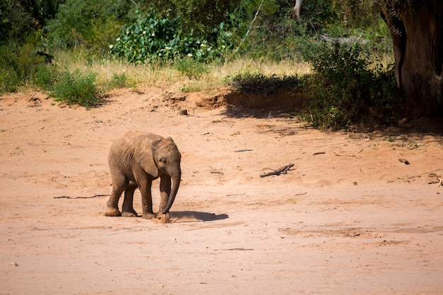 One little baby elephant is standing on the bank of a river