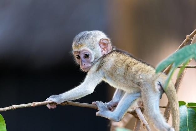 1つの小さな面白い猿が床または木の上で遊んでいます