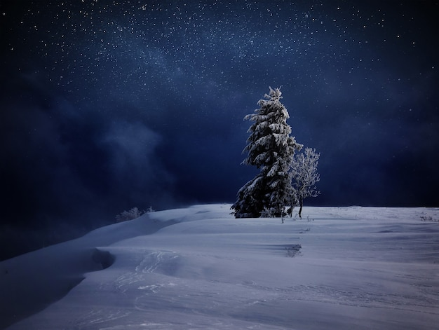 One magical winter snow covered tree stay along. winter landscape. vibrant night sky with stars and nebula and galaxy. deep sky astro photo.