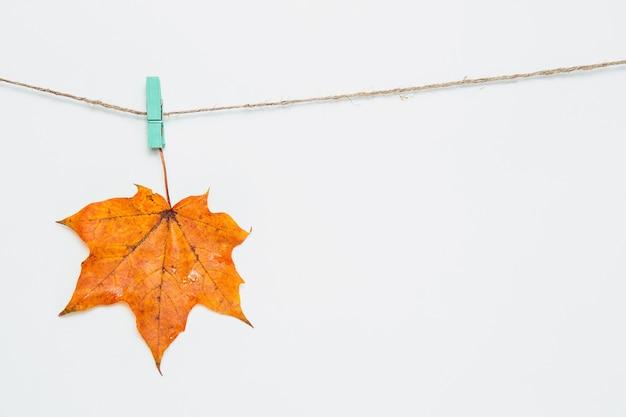 洗濯バサミにぶら下がっているカエデの葉1枚。ストリングの白い背景に新鮮なオレンジ色のカエデの葉。秋の作曲、コピースペース、フラットレイ、モックアップ。