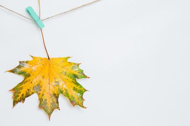 洗濯バサミにぶら下がっているカエデの葉1枚。ストリングの白い背景に緑のカエデの葉と新鮮な黄色。秋の作曲、コピースペース、フラットレイ、モックアップ。