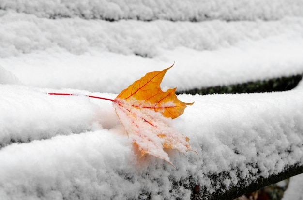 One orange color leaf on snow in park bench.close up snowy maple leaf in winter season