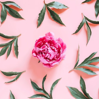 One peony flower in full bloom vibrant pink color and repeating pattern of leaves, isolated on pale pink background. flat lay, top view. square