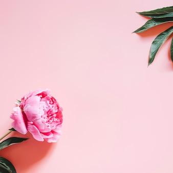 淡いピンクの背景に分離された満開の鮮やかなピンク色の1つの牡丹の花。フラットレイ、上面図、テキスト用のスペース。平方