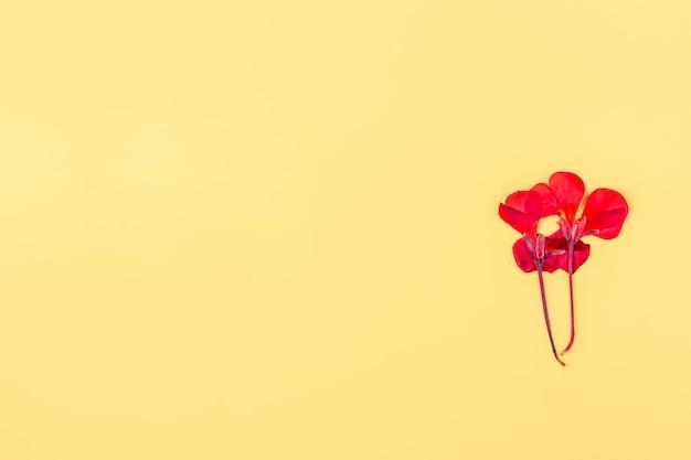 노란색 배경에 말린 붉은 꽃 한 송이를 눌렀습니다. 평평한 평지, 엽서, 초대 카드를 위한 모의 구성. 텍스트를 위한 공간을 복사합니다. 식물 표본 상자, 꽃 배경입니다.