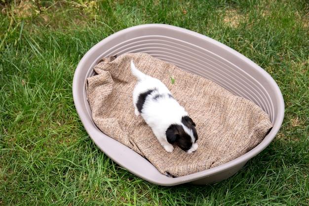 Один щенок в корзине на траве