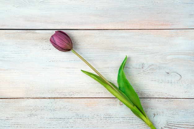One purple tulip on a light wooden background. top view with space to copy.