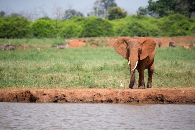 赤い象が滝壺に水を飲んでいる