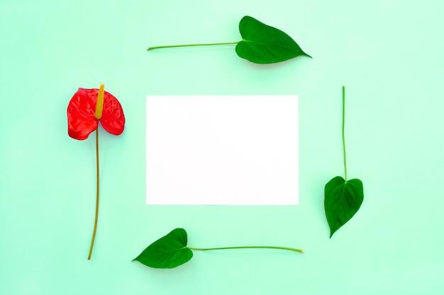 1つの赤い花と葉が白紙のフレームを形成します。