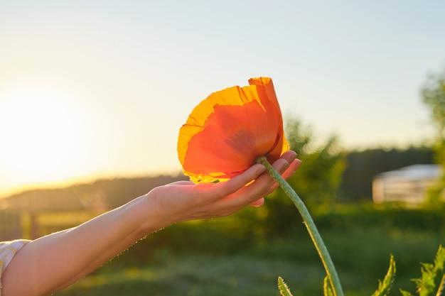 Один красный цветок мака в руке женщины