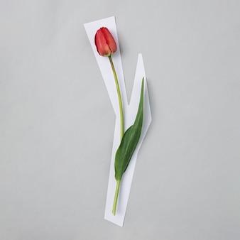 회색 배경 및 평면도에 줄기를 가진 한 빨간 튤립. 꽃은 배경에서 잘린 것처럼 보이며 테두리가 흰색입니다. 현대 무역 개념.