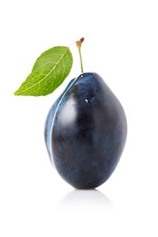 白い表面に分離された1つの熟したプルーンフルーツ