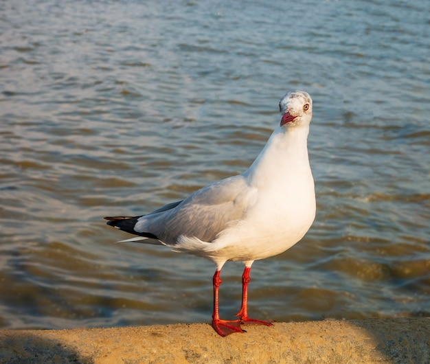 One seagull is on a concrete bridge