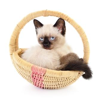 バスケットに座っている1匹の小さな灰色の子猫