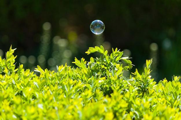 One soap bubble over green bush.