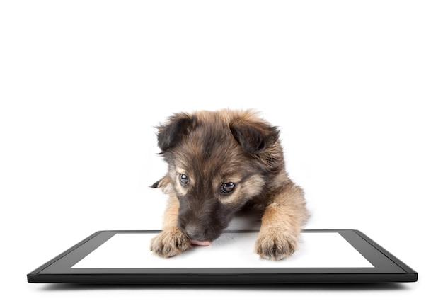 白い表面に1つのタブレット、イパデのようにタレットに犬