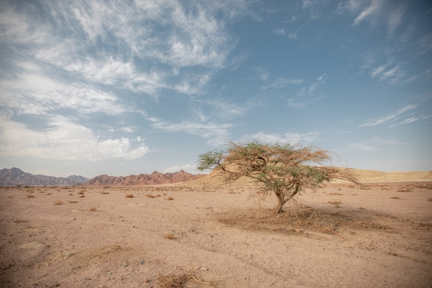 One tree in a dry sandy empty amid hills and clouds. a lonely tree in arid dustagainst against a backdrop of remote hills and sky