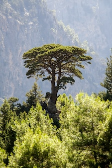 One tree on the high mountains in the environment wind and rain and refreshing green forest