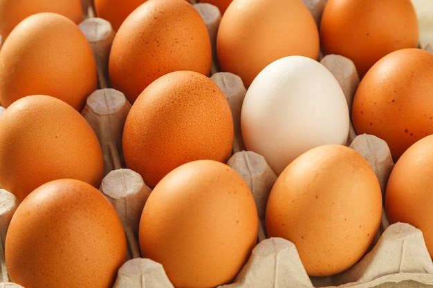 One white chicken egg against a group of brown eggs in a carton pack