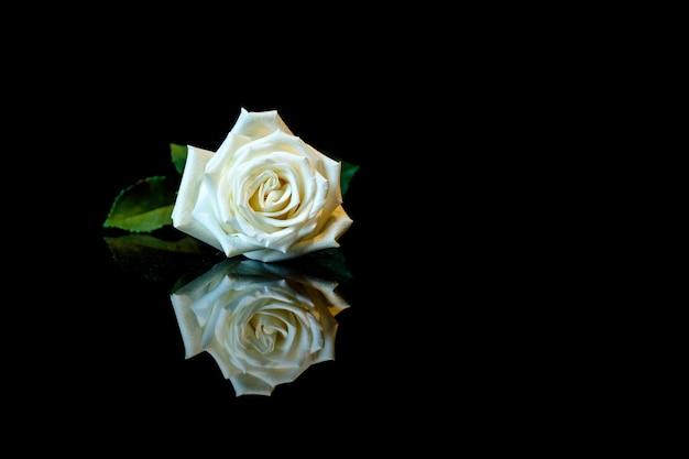 복사 공간이 있는 검은색 반사 표면에 흰색 장미 1개