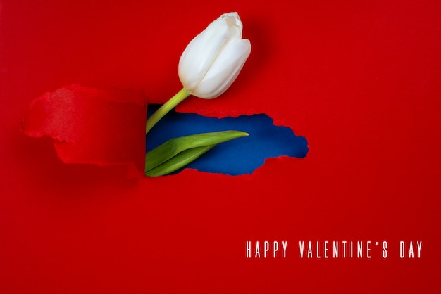 One white tulip is visible from a hole in the red paper. inside, a blue color and a green leaf are shown