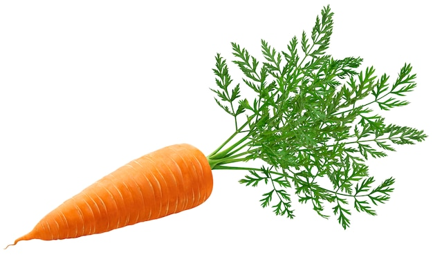 One whole carrot with leaves isolated