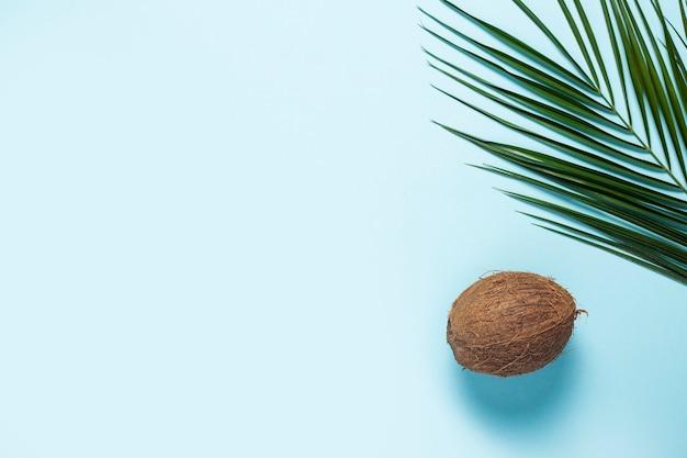 파란색에 코코넛과 야자 잎 하나 하나
