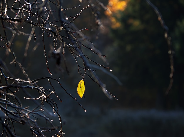 One yellow leaf on an autumn branch. the natural background.