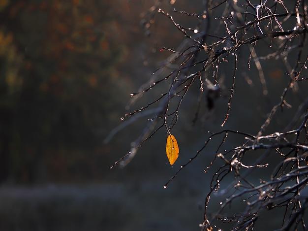 秋の枝に1つの黄色の葉