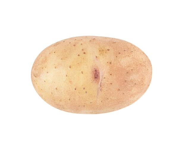 白い背景で隔離の1つの若いジャガイモ