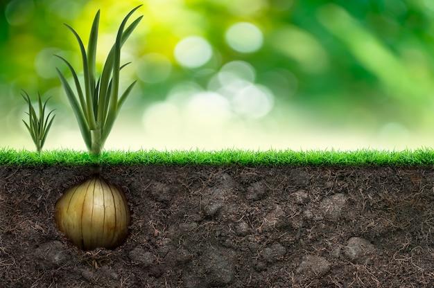 Луковица и трава на зеленом фоне