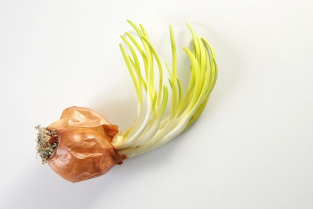 タマネギの芽。白い背景を閉じます。