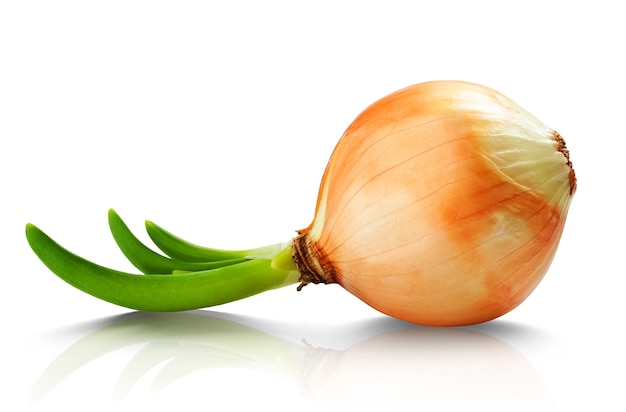 Onion with fresh green sprout.