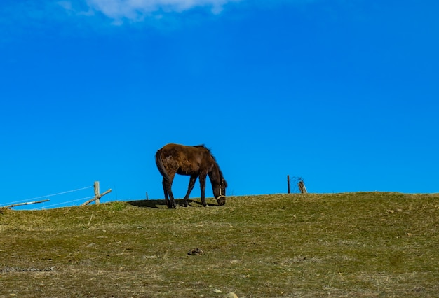 Only horse walking on a hill
