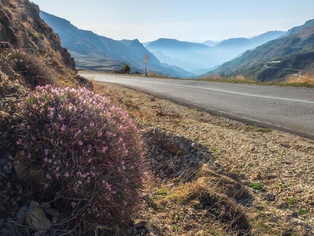 大きな青い山々を背景に、空のアスファルト道路近くの山の斜面にあるonobrychiscornutaの茂み。