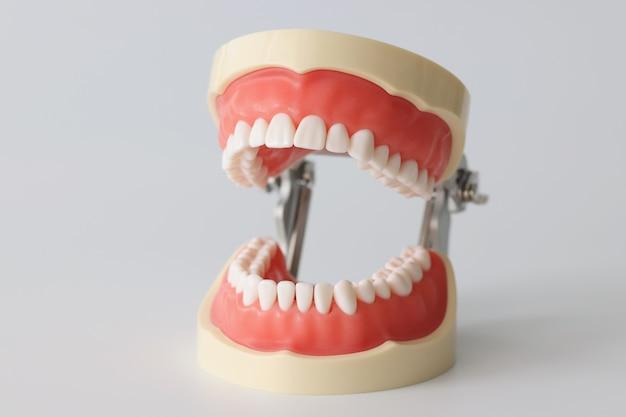 아름다운 직선 치아가 있는 열린 인공 턱은 인간의 치아 턱 개념을 조롱합니다