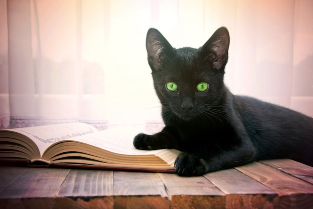 Open book and black cat on wooden table.