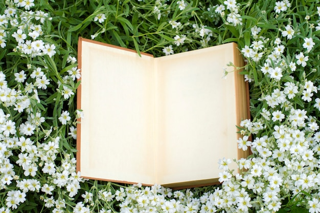 Open book lies on white flowers
