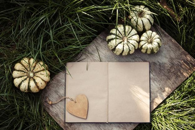 Open book and mini pumpkins on green grass