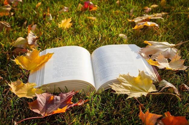 Открытая книга на траве с желтыми листьями в осеннем парке.