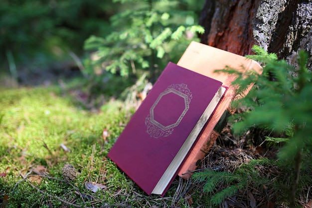 Open book outdoor. knowledge is power. book in a forest. book on a stump