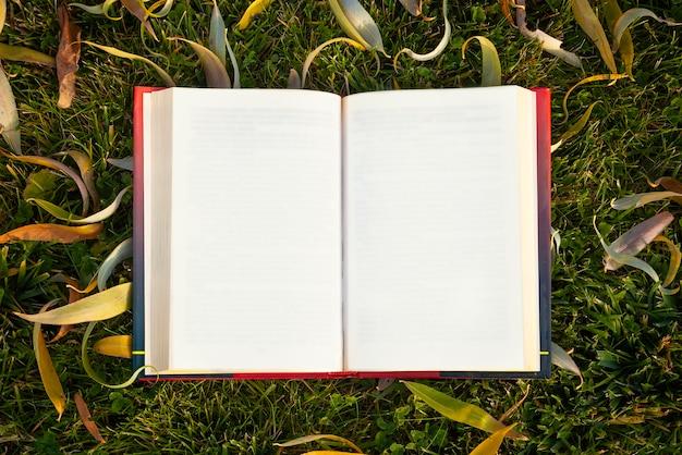 Открытая книга с осенними листьями на зеленой траве.