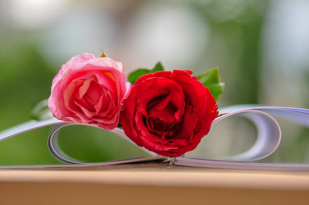 Open book with beautiful roses