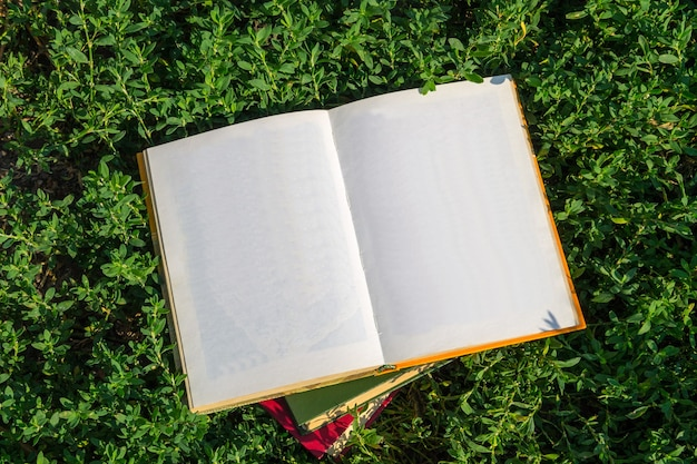 Open book with blank pages on green grass