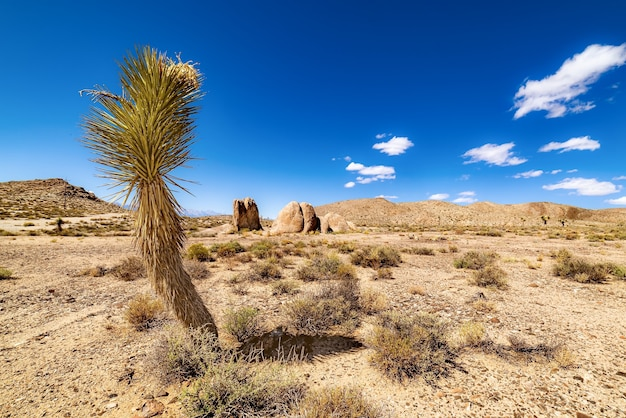 Open desert field with sandy hills and a cloudy blue sky