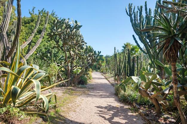 Open exotic garden, botanical garden with big cactus in a sunny summer day