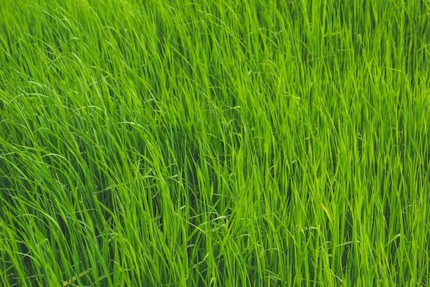 푸른 잔디와 함께 오픈 필드